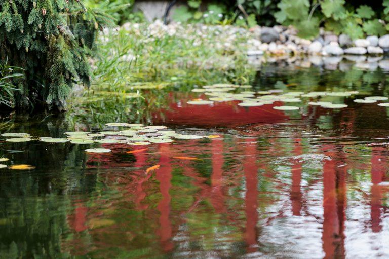 Koi fishpond at Allen Centennial Gardens